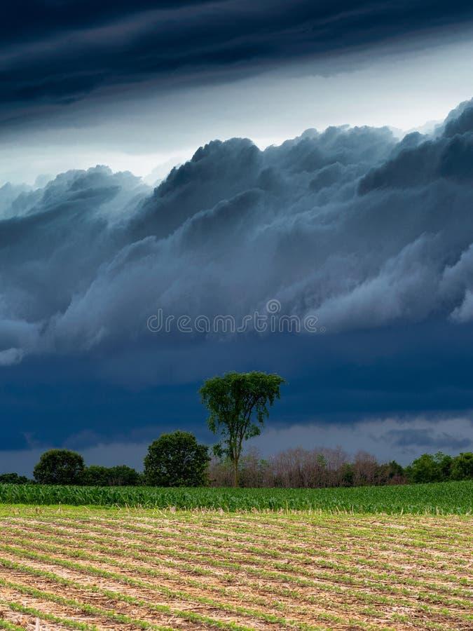 Mooi aardbehang met ontzagwekkende hemelachtergronden royalty-vrije stock foto's