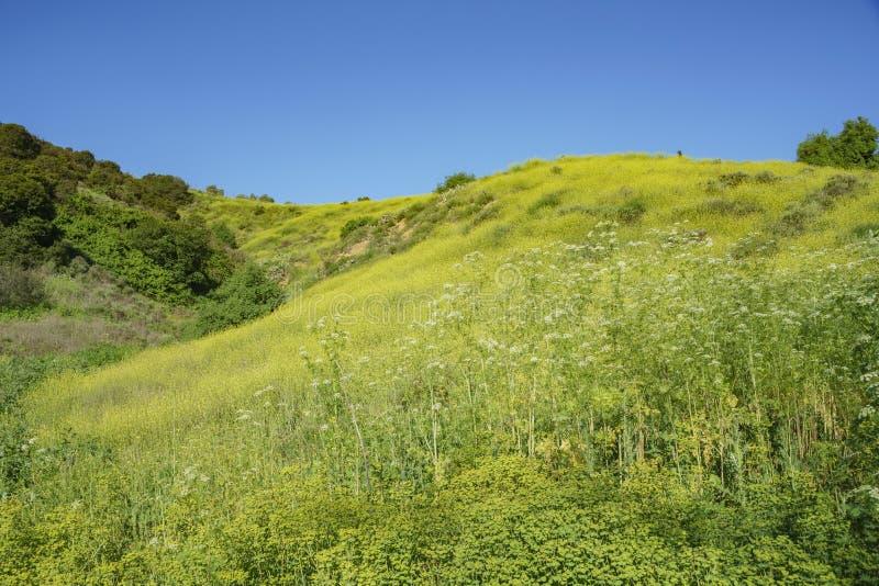 Mooi aardlandschap rond Peter F Schabarum Regionaal Park stock afbeeldingen