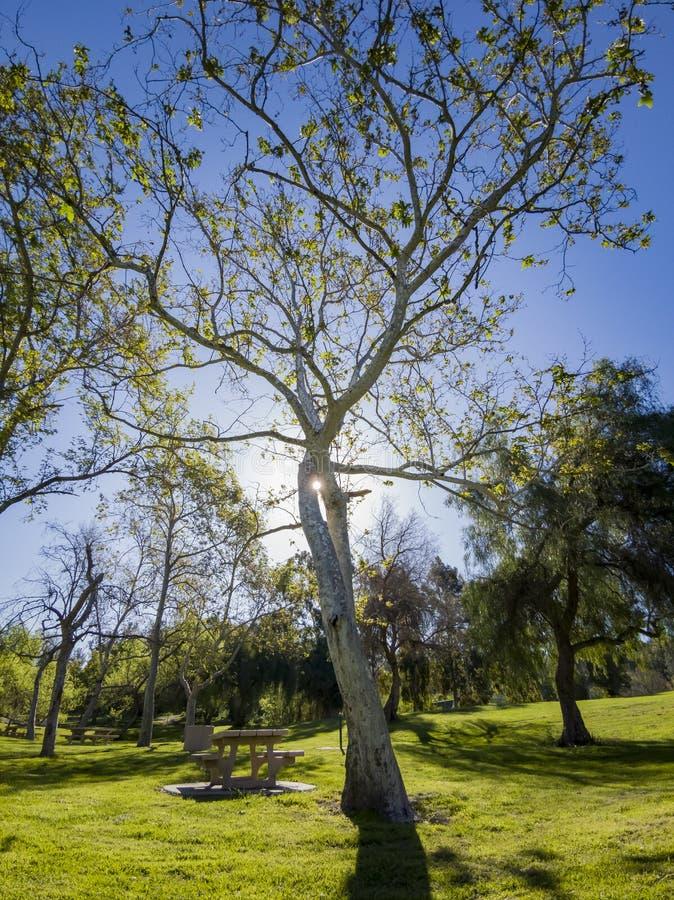 Mooi aardlandschap rond Peter F Schabarum Regionaal Park stock foto's