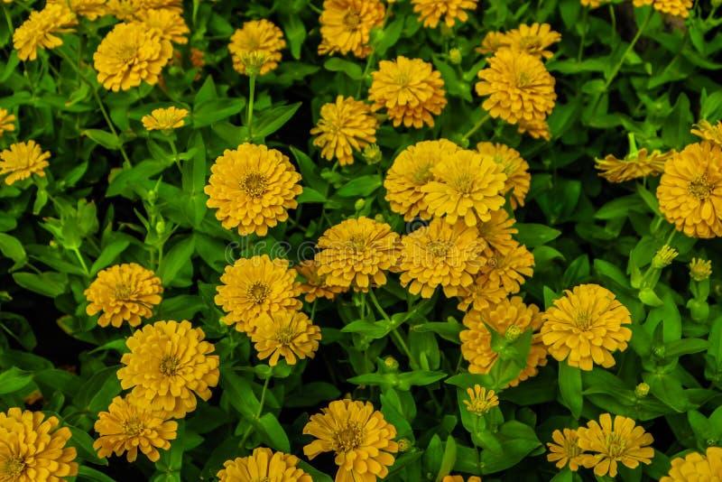 Mooi abstract de bomeninstallaties en bos van textuur wit oranje en geel bloemen lalandscape in het openbare pari van de aard gro royalty-vrije stock foto