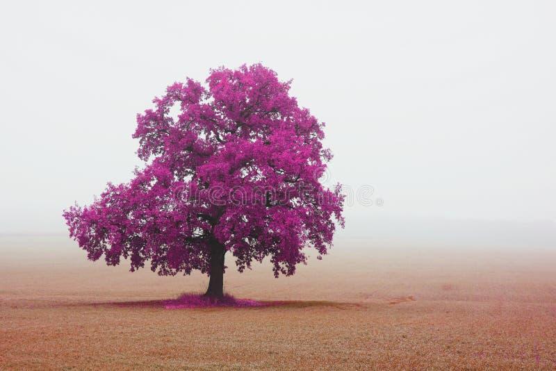 Mooi abstract landschap met eenzame ongebruikelijke boom in daling van mist stock fotografie
