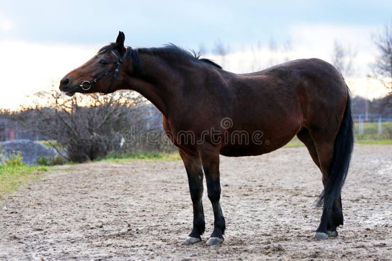 Mooi baaipaard in automn stock foto's