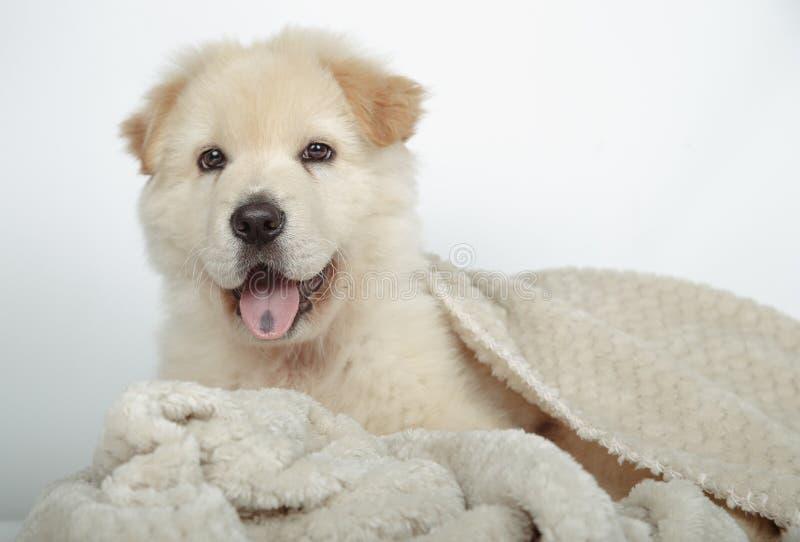 Mooi bastaard puppy dat met zijn deken wordt omringd royalty-vrije stock fotografie