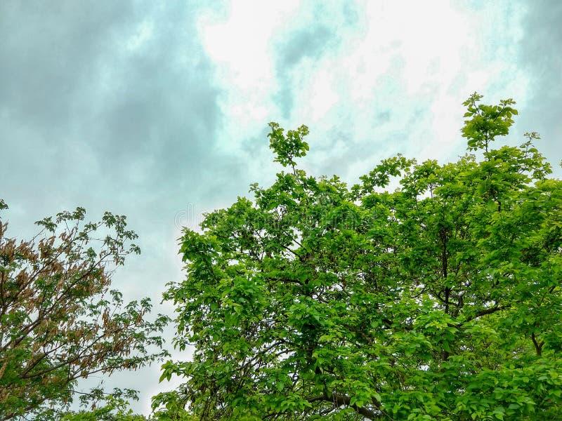 Mooi beeld van de hemel stock afbeeldingen