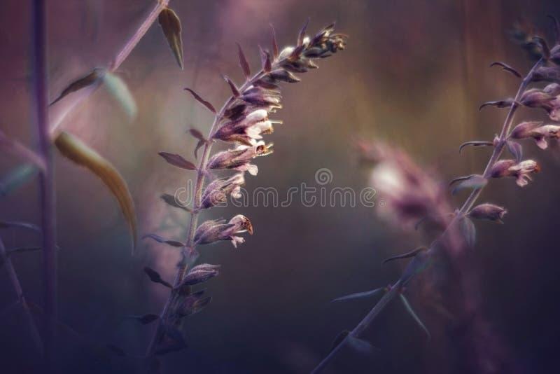 Mooi beeld van wilde bloemen op een purpere zonsondergang Landschap met wildflowers Zonsondergang bloemenachtergrond Uitstekende  stock afbeelding