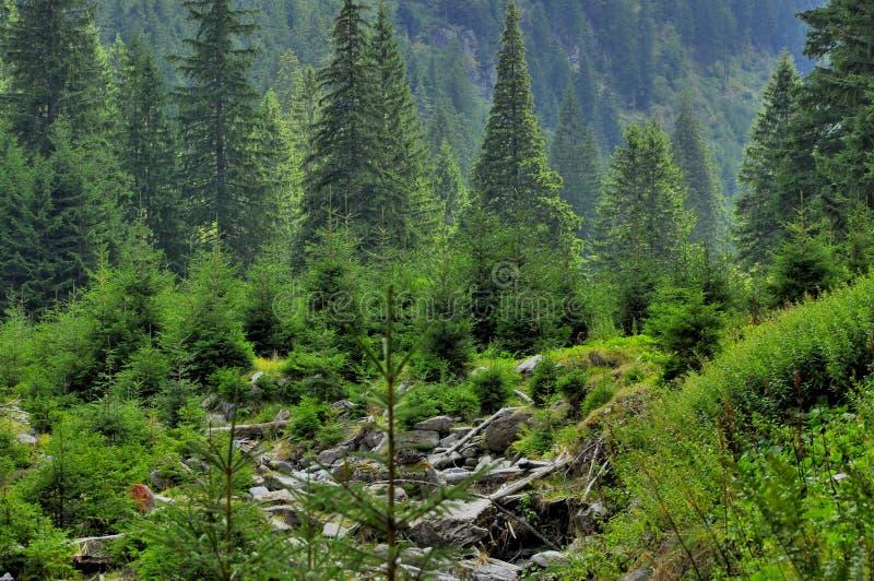 Mooi bergenlandschap met pijnboombomen voor stock fotografie