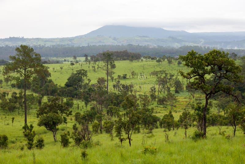 Mooi berglandschap bij het Nationale Park van Thung Salang Luang; stock fotografie