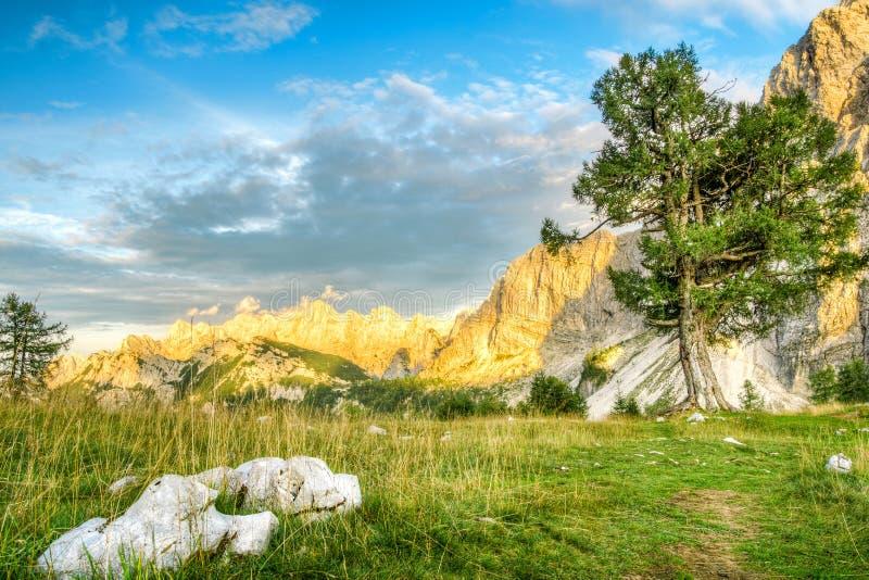 Mooi berglandschap met oude leeuwerikboom in zonsonderganglicht Julian Alps, het Nationale Park van Triglav slovenië stock foto