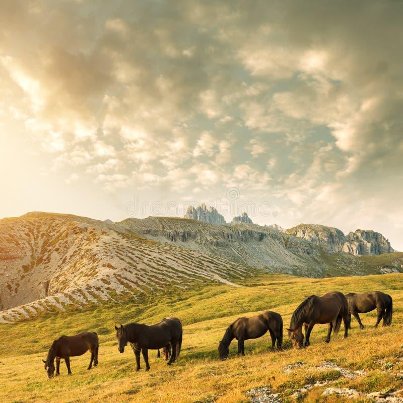 Mooi berglandschap met paarden in de voorgrond stock afbeeldingen