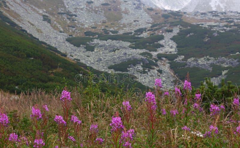 Mooi berglandschap met wilgeroosje royalty-vrije stock afbeeldingen