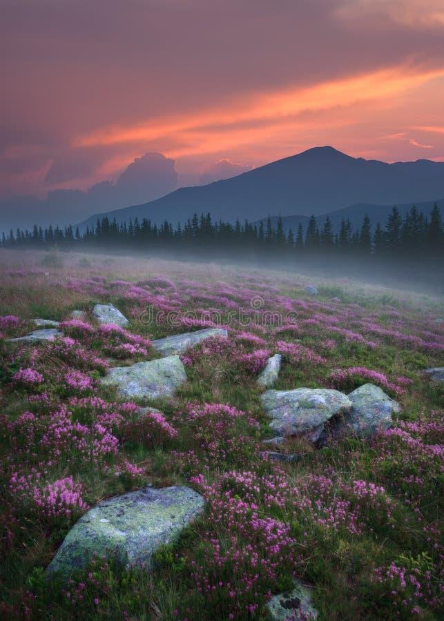 Mooi berglandschap in Roemenië bij zonsondergang stock afbeeldingen
