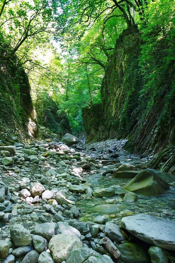 Mooi bergravijn met een kreek in zuidelijk bos stock afbeeldingen