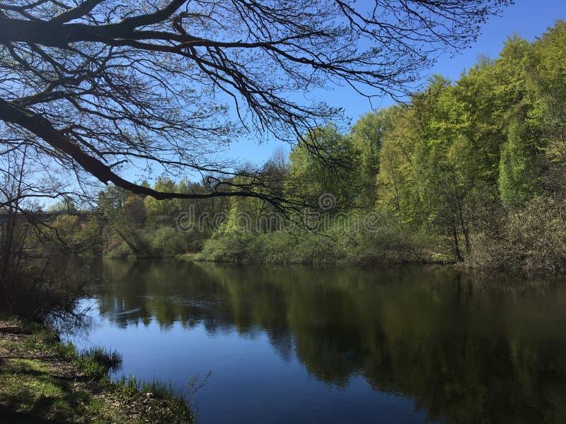 Mooi blauw bos, zonlicht en bomen in Zweden stock foto