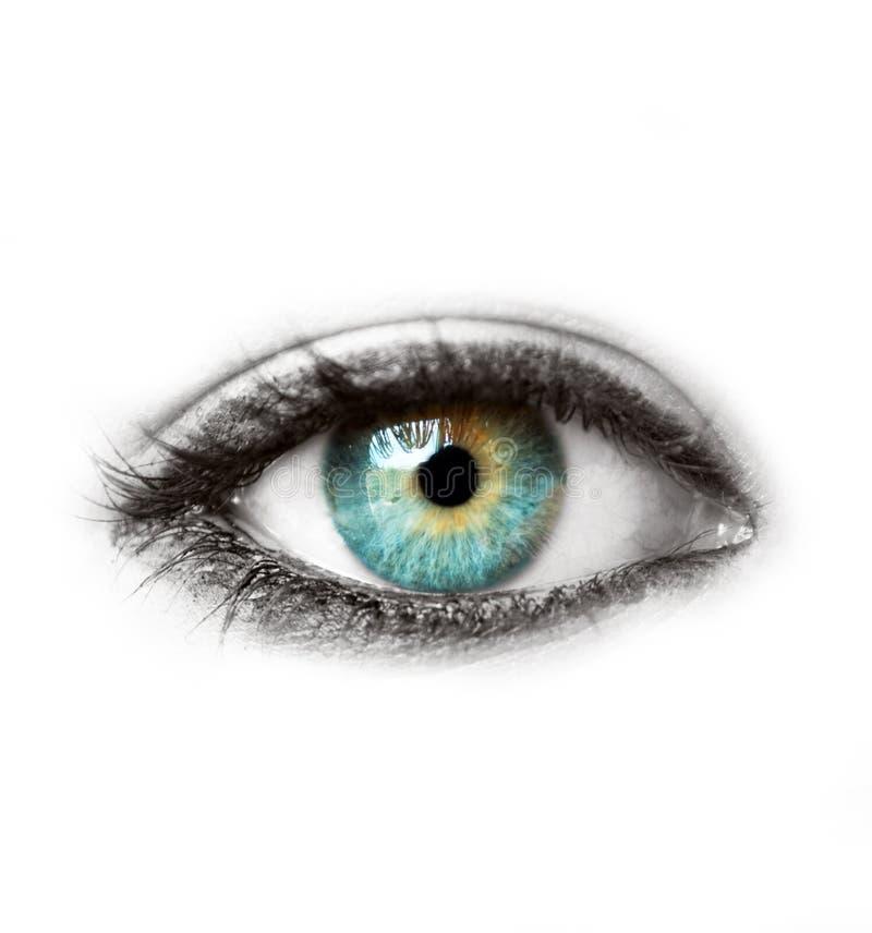 Mooi blauw menselijk die oog op wit macroschot wordt geïsoleerd stock foto