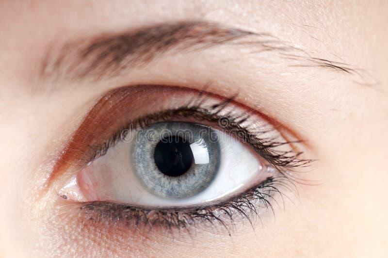 Mooi blauw oogmeisje stock foto's