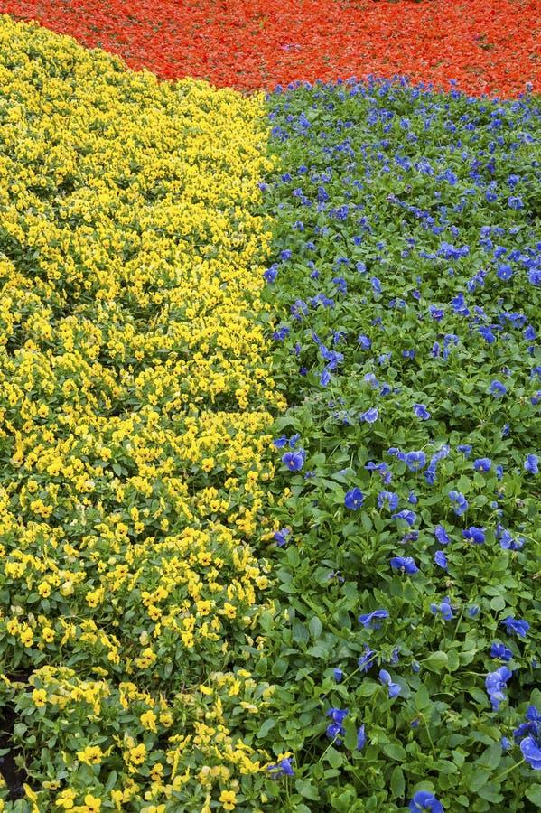 Mooi bloembed stock afbeeldingen