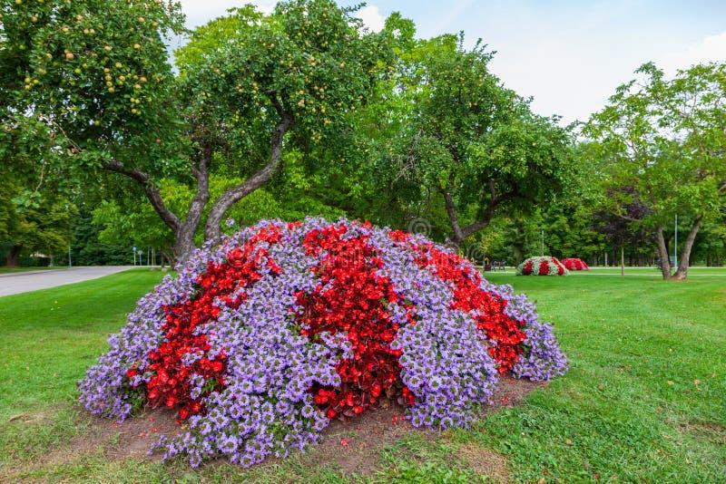 Mooi bloembed in de zomerpark stock foto