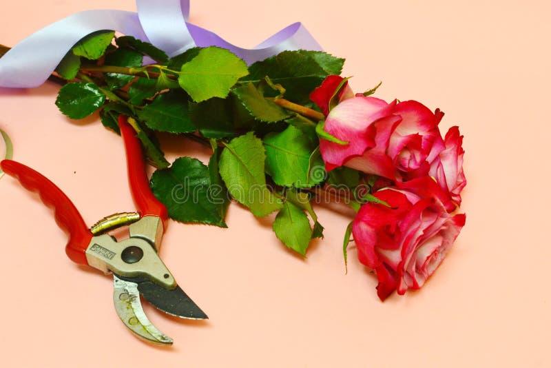 Mooi bloemen en bloemistmateriaal op roze achtergrond royalty-vrije stock foto's