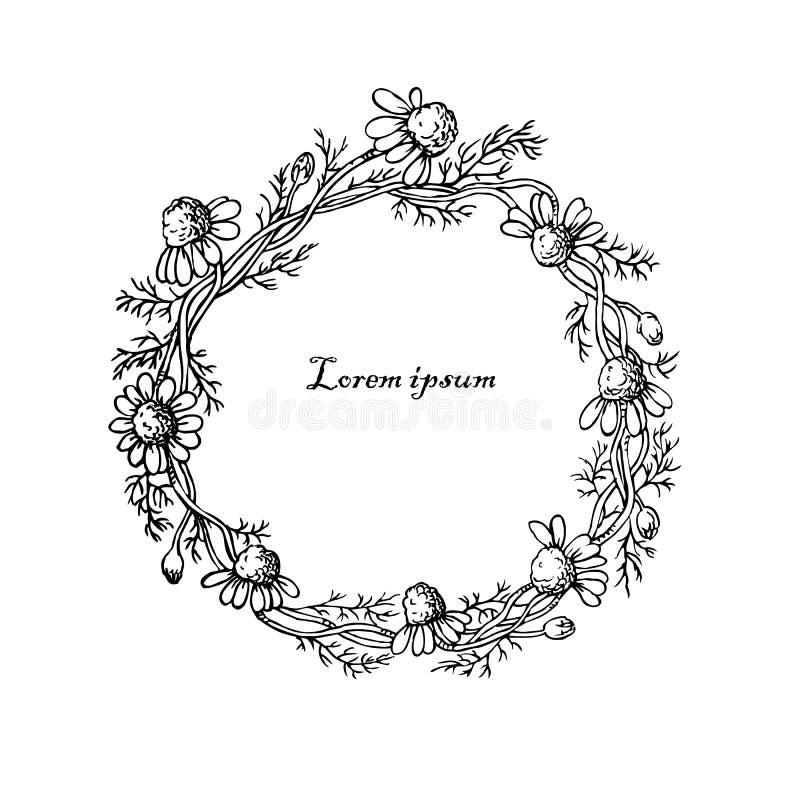 Mooi bloemenkader met madeliefjes op witte achtergrond royalty-vrije illustratie