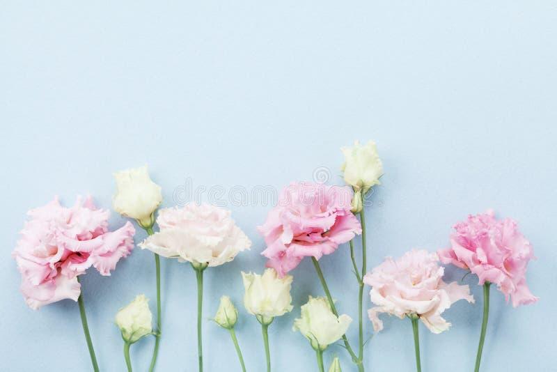 Mooi bloemenkader van pastelkleurbloemen op blauwe hoogste mening als achtergrond vlak leg stijl stock foto