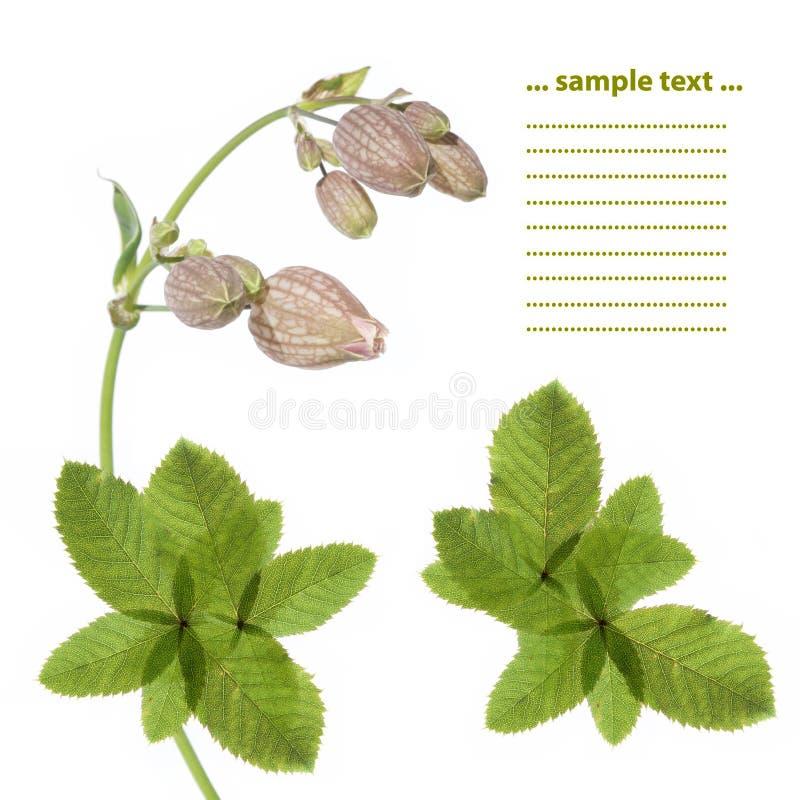 Mooi bloemenontwerpelement stock foto