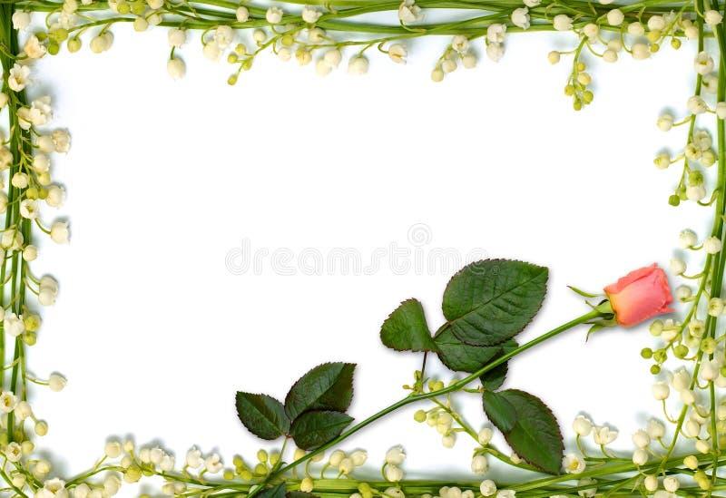 Mooi bloemframe met roze roze achtergrond royalty-vrije stock foto