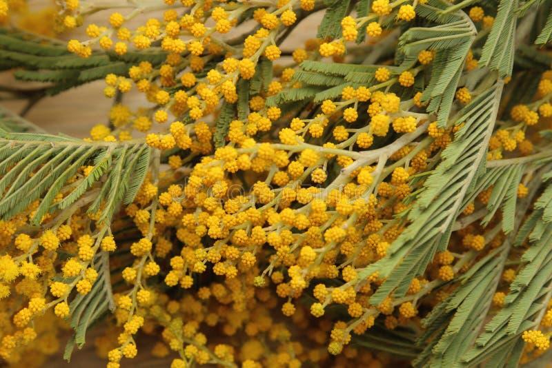 Mooi boeket van gele mimosabloemen op een natuurlijke houten lijst Close-up royalty-vrije stock fotografie