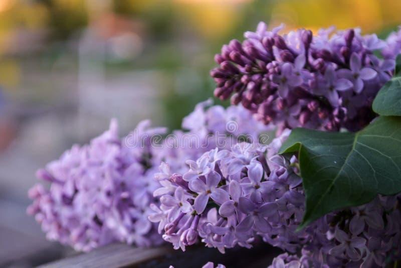 Mooi boeket van purpere sering op een vage achtergrond De lente royalty-vrije stock foto