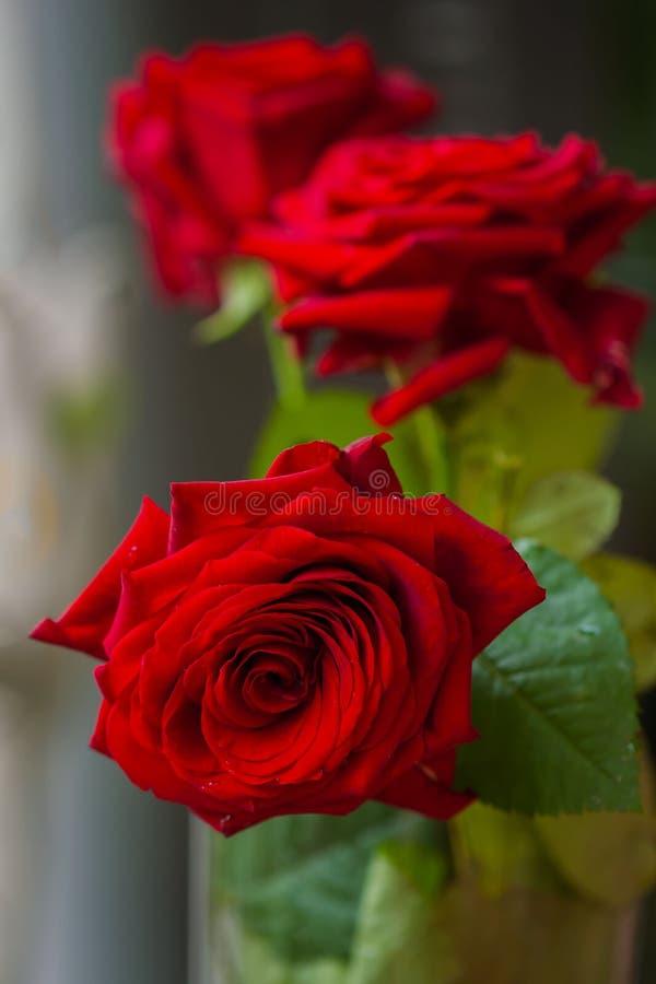 Mooi boeket van rode rozen met greens voor vrouw en bruid, huwelijk, overeenkomstenconcept, bloemen Verticaal vormgebruik royalty-vrije stock afbeeldingen