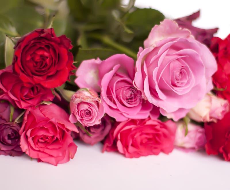 Mooi boeket van roze en rode rozen op witte achtergrond royalty-vrije stock afbeeldingen