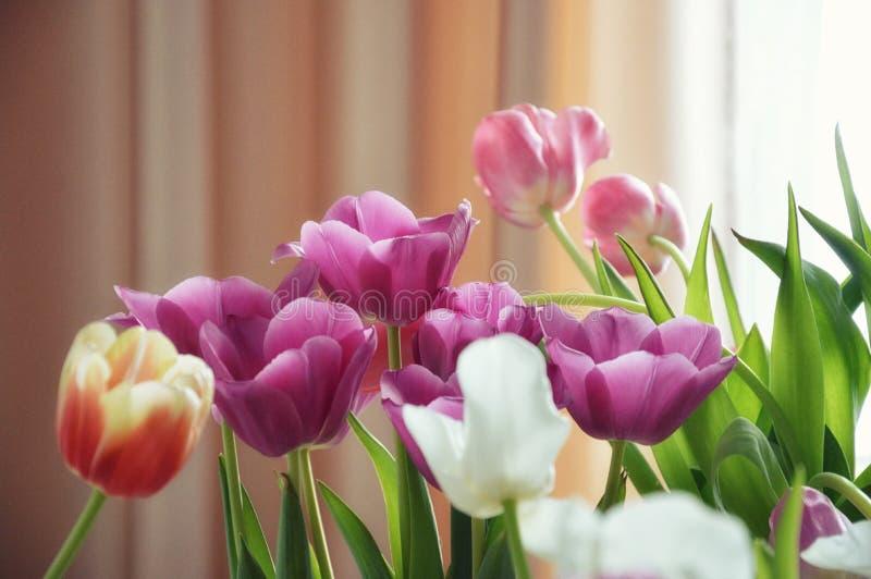 Mooi boeket van tulpen stock afbeelding