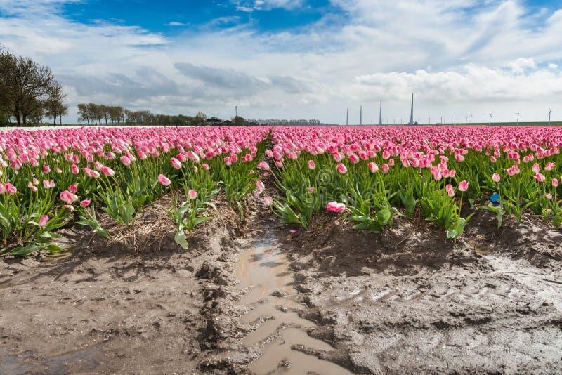 Download Mooi Boeket Van Tulpen Kleurrijke Tulpen Tulpen In De Lente S Stock Foto - Afbeelding bestaande uit boeket, blossoming: 54080624