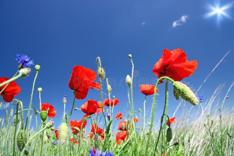 Mooi boeket van wilde bloemen. stock foto