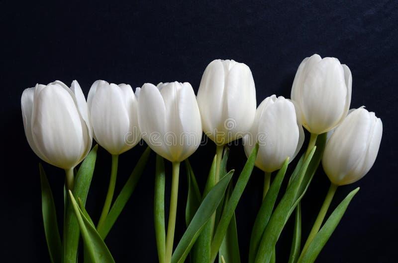 Mooi boeket van witte tulpen stock afbeelding