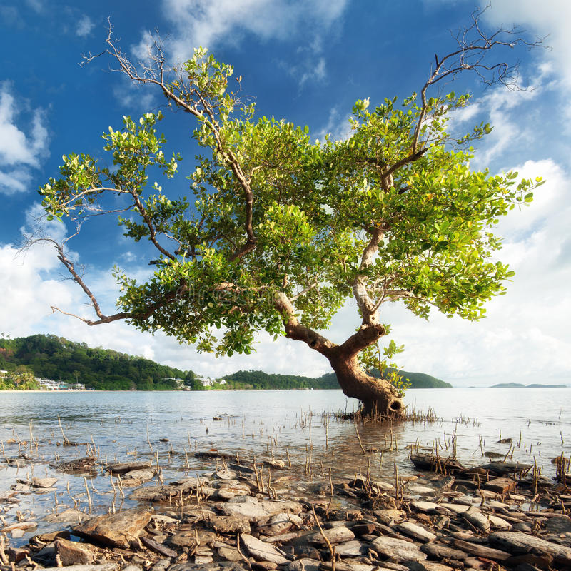 Mooi boomsilhouet in het landschap van het ochtendzonlicht royalty-vrije stock foto