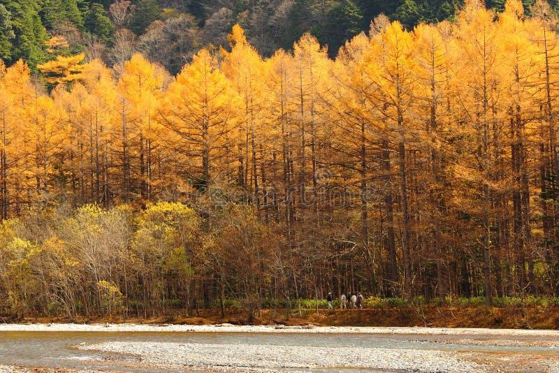 Mooi bos in de herfst stock afbeeldingen
