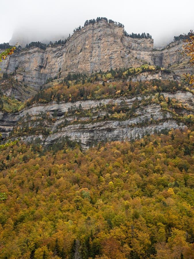 Mooi bos in de herfst onder een mistige berg stock afbeeldingen