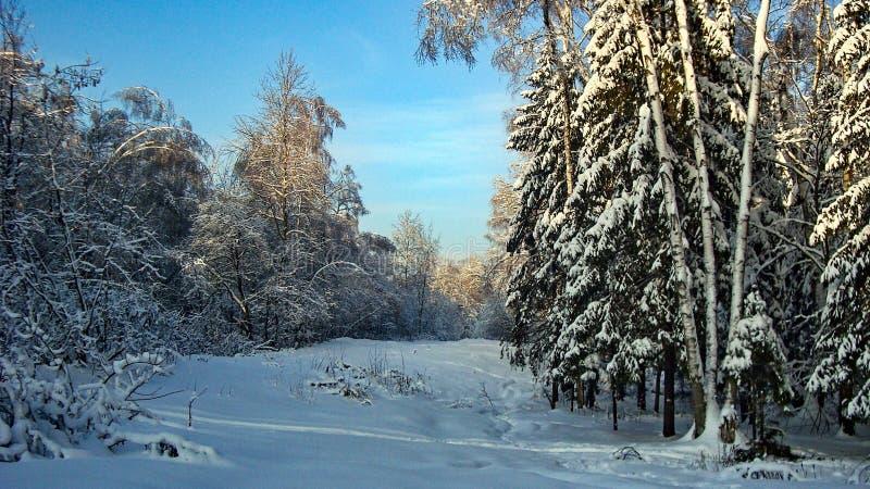 Mooi bos in de sneeuw, Rusland stock foto's