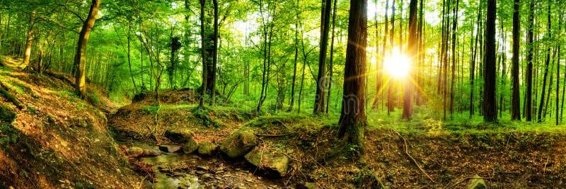 Mooi bos in heldere zonneschijn stock foto's