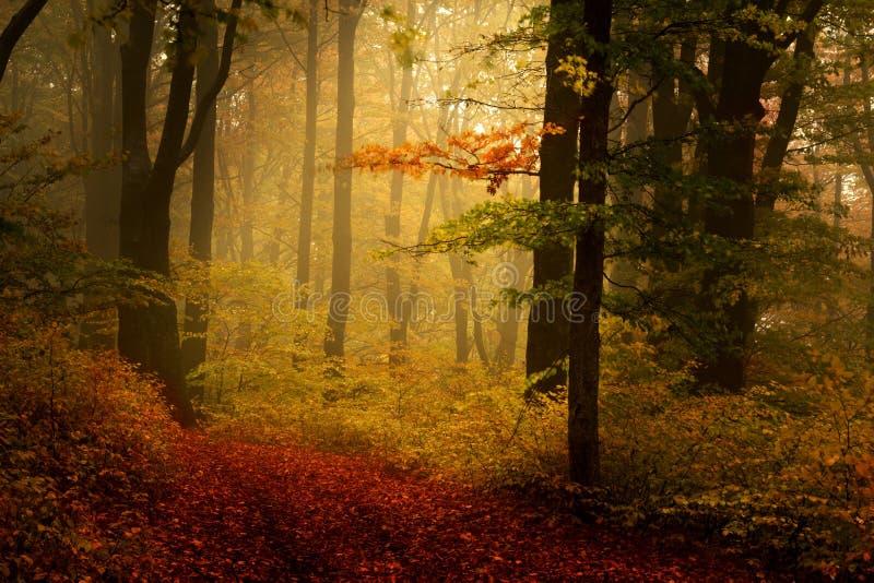 Mooi bos tijdens de herfst royalty-vrije stock foto