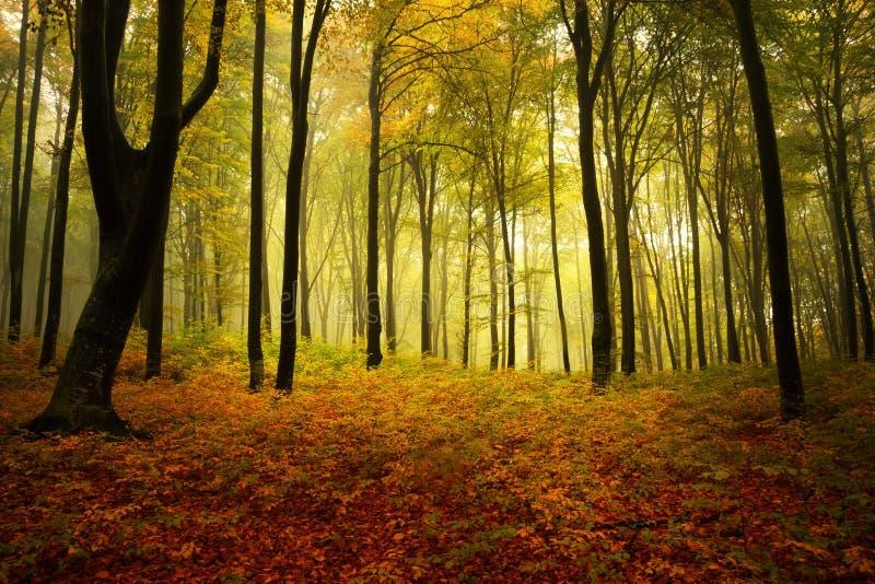 Download Mooi bos tijdens de herfst stock afbeelding. Afbeelding bestaande uit spook - 29513773