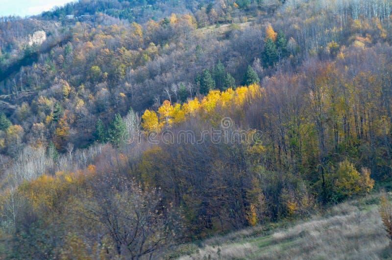 Mooi boslandschap met trillende Autumn Fall-seizoenkleur royalty-vrije stock afbeelding