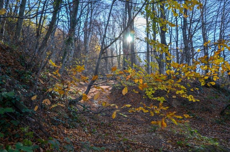 Mooi boslandschap met trillende Autumn Fall-seizoenkleur royalty-vrije stock foto's
