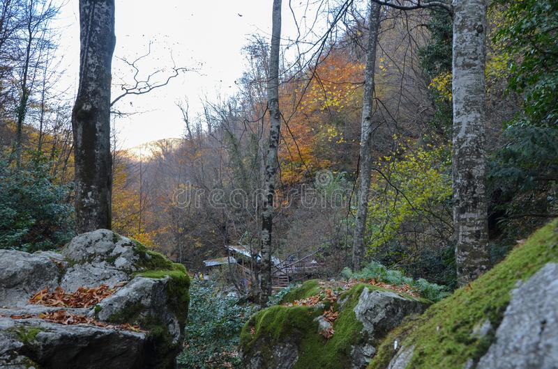 Mooi boslandschap met trillende Autumn Fall-seizoenkleur stock afbeelding