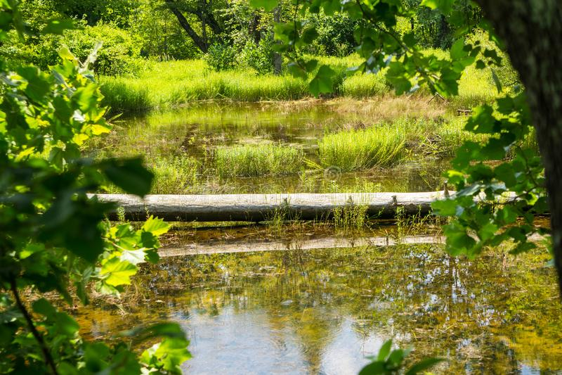 Mooi Bosmoeras in Craig County, Virginia, de V.S. stock fotografie