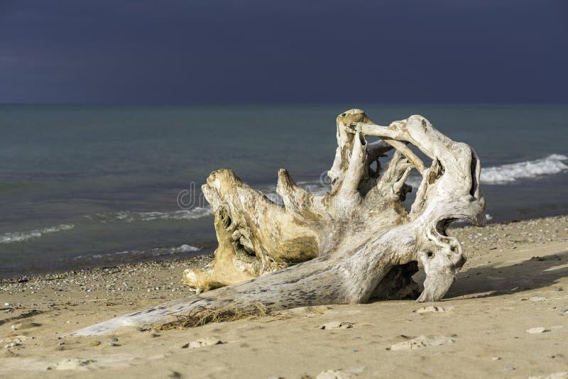 Mooi brok van drijfhout die op het strand, turquois leggen royalty-vrije stock afbeelding