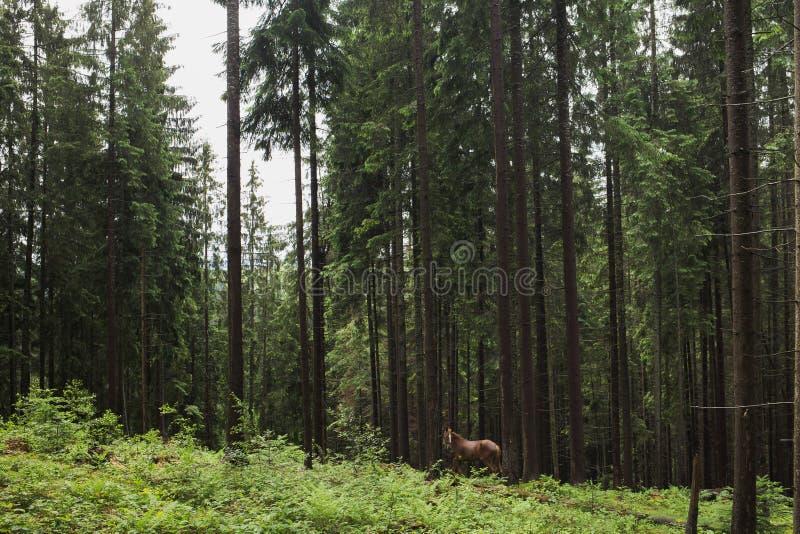 Mooi bruin eenzaam paard stock foto
