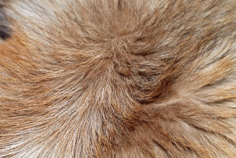 Mooi bruin en beige hondenbont stock afbeeldingen