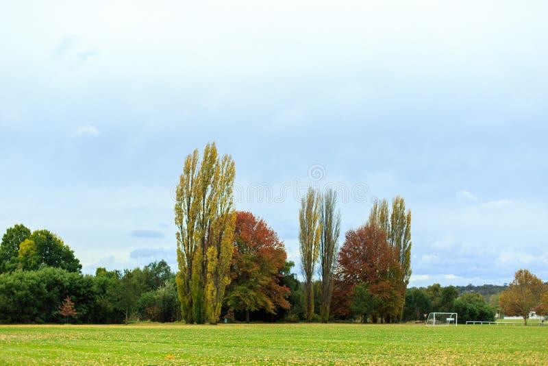 Mooi de herfst vinatge landschap, weide en gele bomen stock afbeeldingen