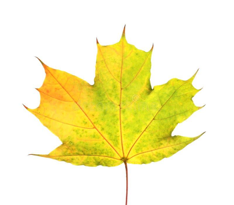 Mooi de herfstblad op witte achtergrond royalty-vrije stock fotografie